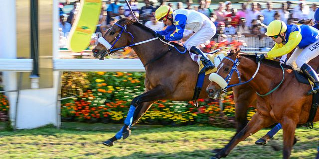 Mauritius horse racing betting sites bet on best bet